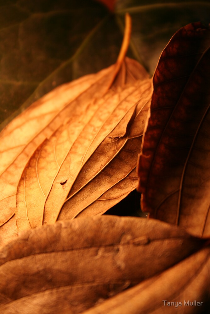 Golden leafs by Tanya Muller