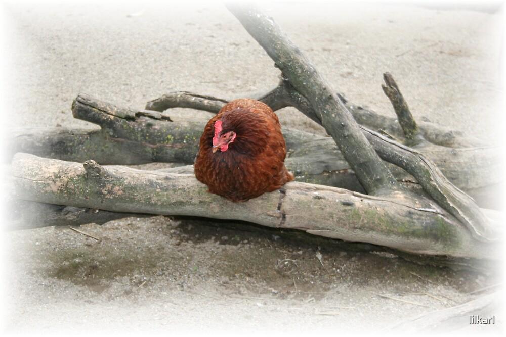 Lone Chicken by lilkarl