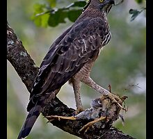 Changeable Hawk Eagle with Kill by ansi247