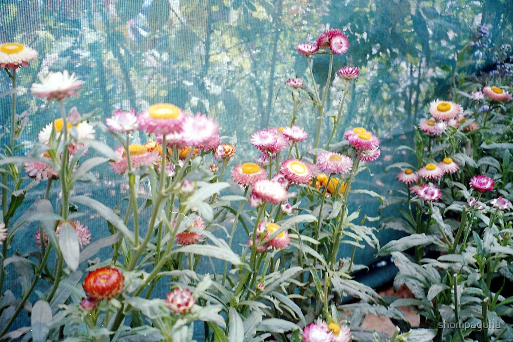 Flowers by shompaguha