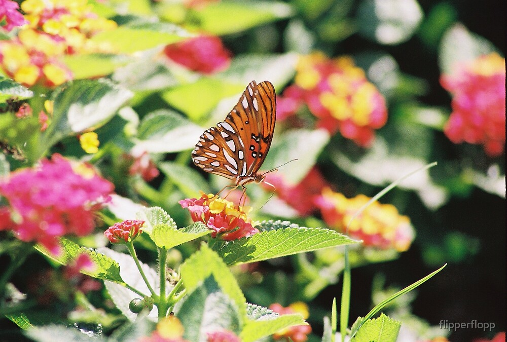 goodmorning butterfly by flipperflopp
