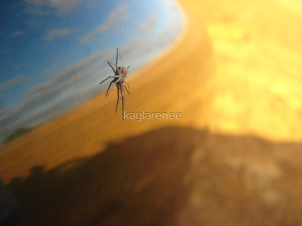 Spider reflection by kaylarenee