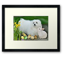 Snowdrop the Maltese at Easter Framed Print