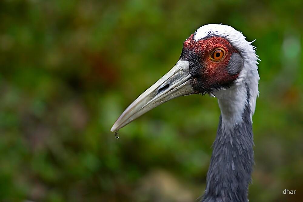 Crane Beak by dhar