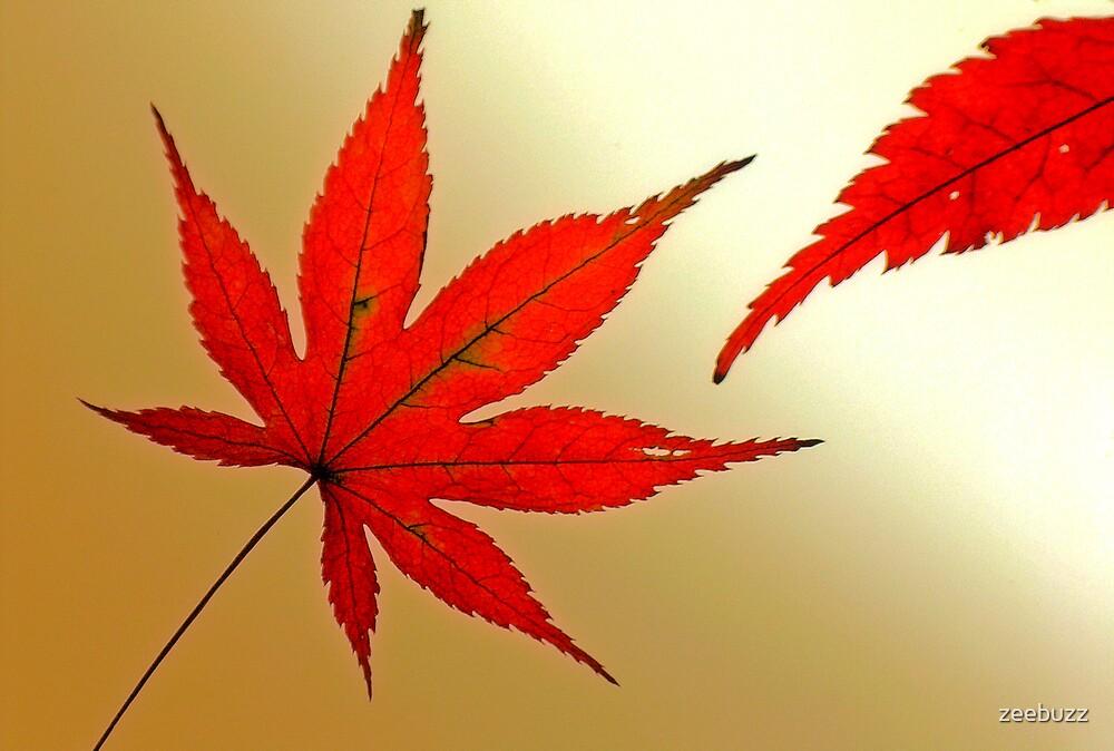 Japanese Maple Leaves by zeebuzz