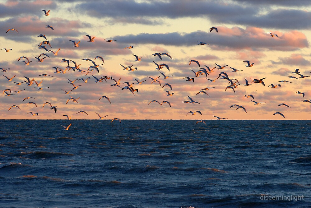 Birds in Flight by discerninglight