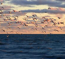 Birds in Flight by discerninglight
