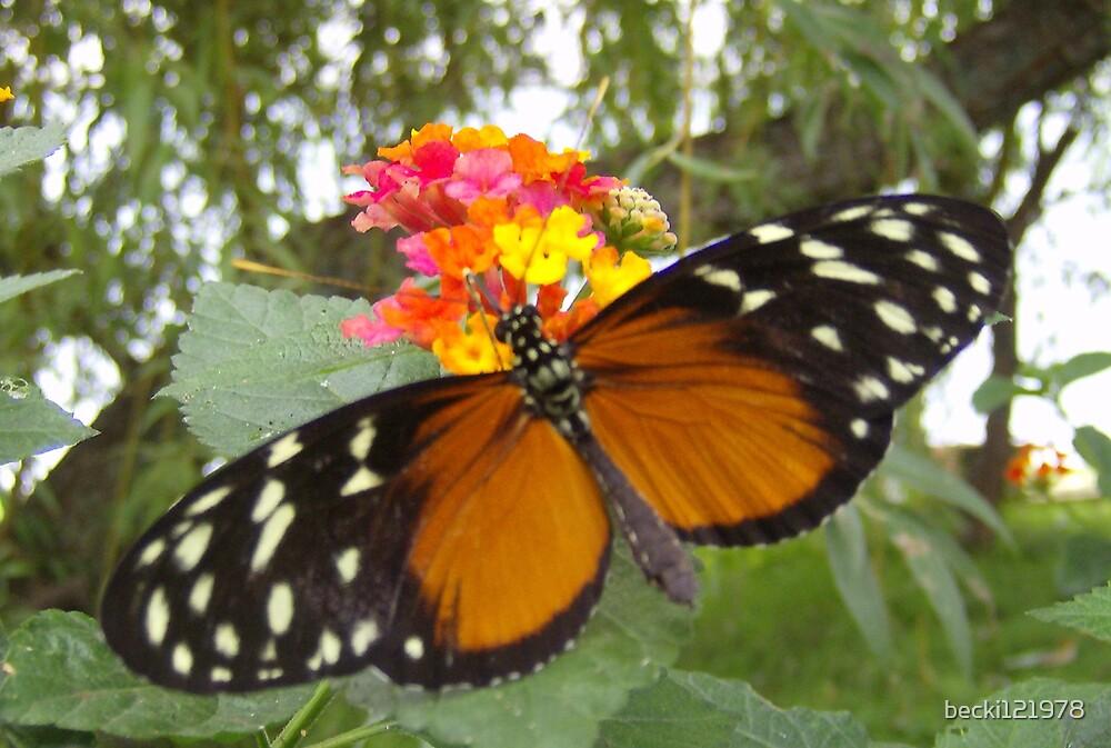 Butteryfly Beauty by becki121978