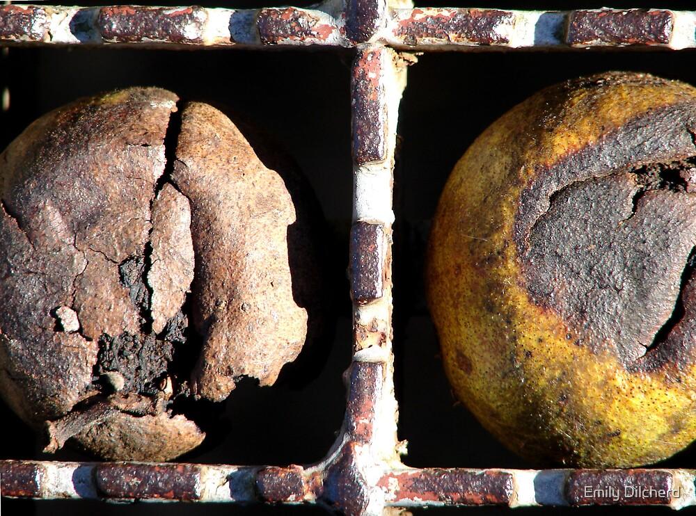 Walnuts by Emily Dilcherd