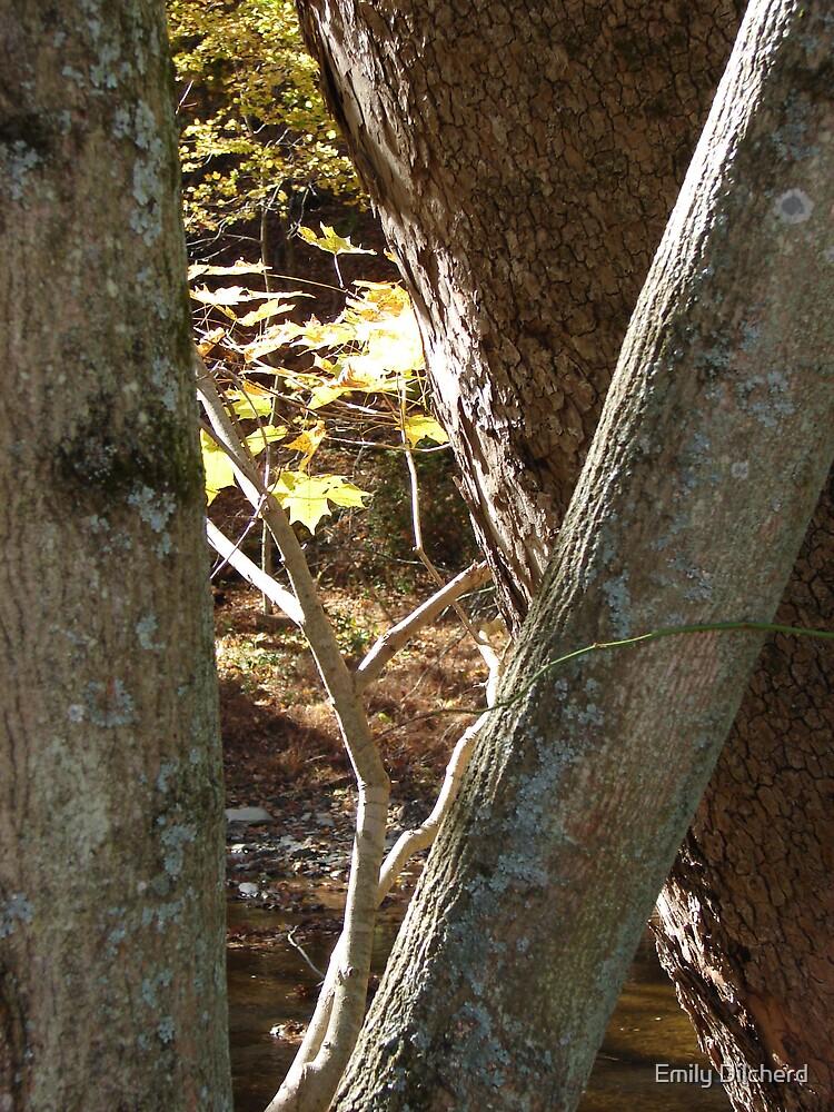 Tree by Emily Dilcherd