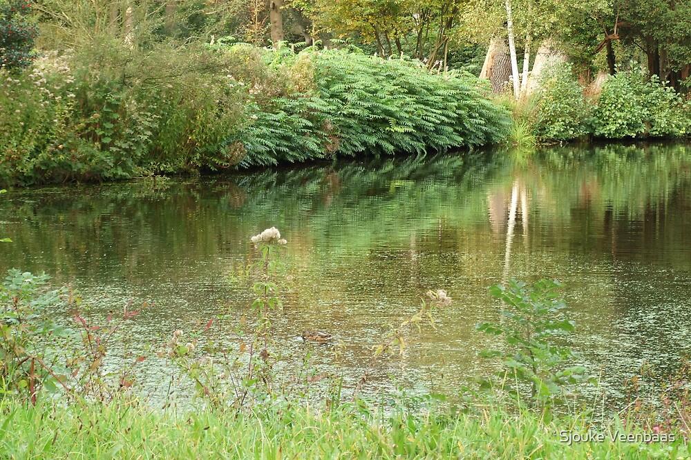 Ferns reflections by Sjouke Veenbaas