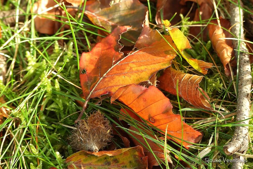 Autumn leaves by Sjouke Veenbaas
