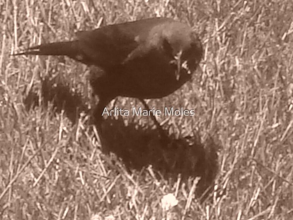 ByeBye Blackbird by Arlita Marie Moles
