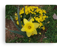 One big flower with a bunch of little ones! Canvas Print