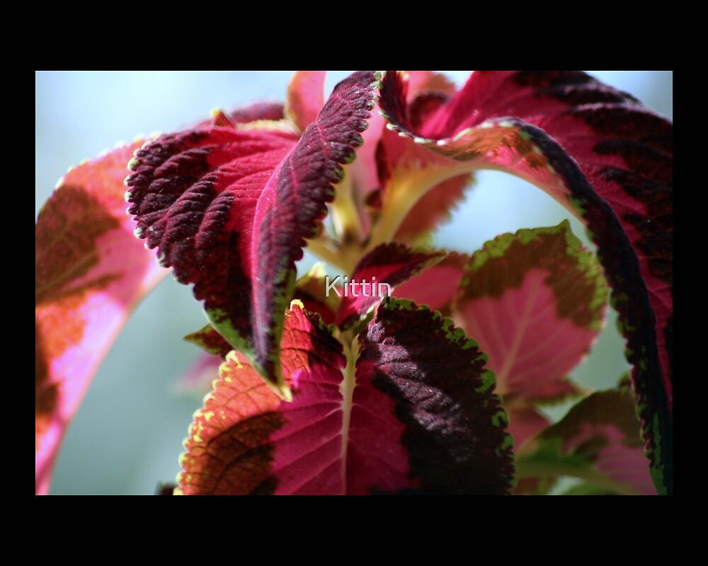 leaves 07 by Kittin