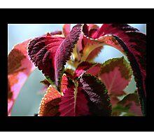 leaves 07 Photographic Print