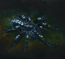 Poecilotheria metallica by chrisWLKP87