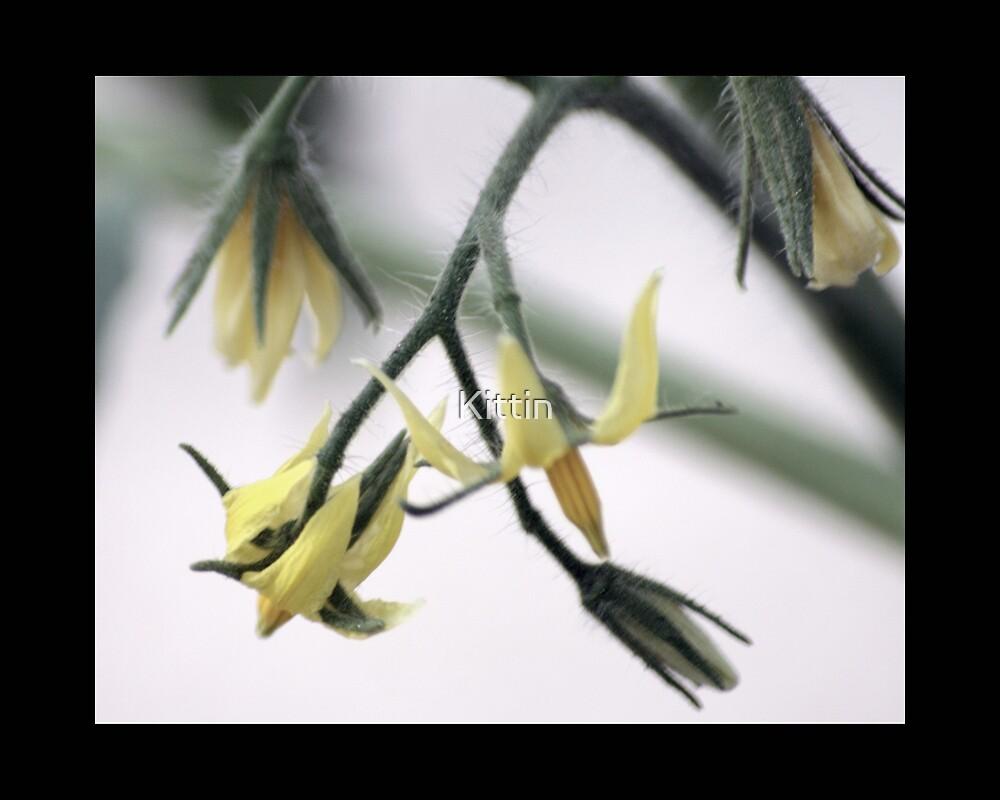 flower 32 by Kittin