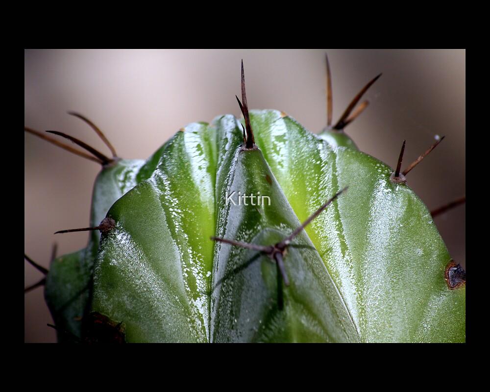 cactus 10 by Kittin