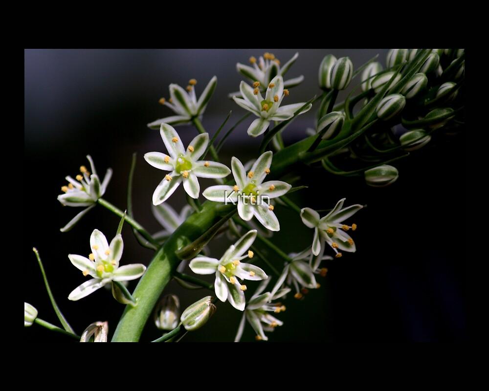 flower 36 by Kittin