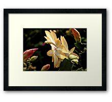 Christmas Cactus - White Swan Floral Framed Print