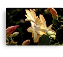 Christmas Cactus - White Swan Floral Canvas Print