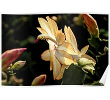 Christmas Cactus - White Swan Floral Poster