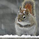 I'm Sooo Tired Of Winter! by Martha Medford