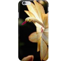 Christmas Cactus - White Swan Floral iPhone Case/Skin