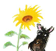 Scottie Dog 'You are my Sunshine' by archyscottie