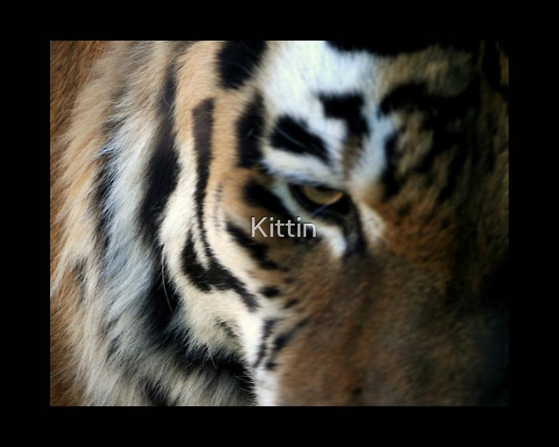 tiger 07 by Kittin