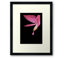 Winter Pink Framed Print
