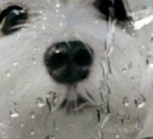 Snowdrop the Maltese - Spring Showers Sticker
