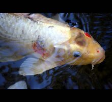 fish 02 by Kittin