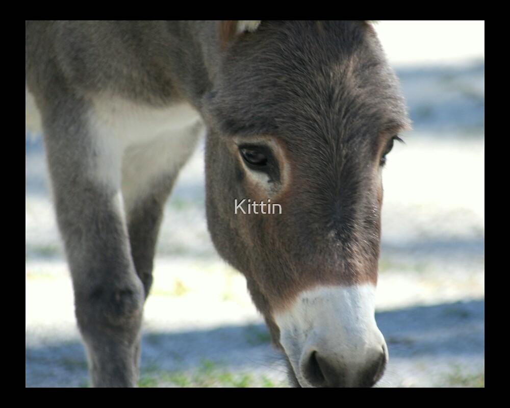 donkey 01 by Kittin