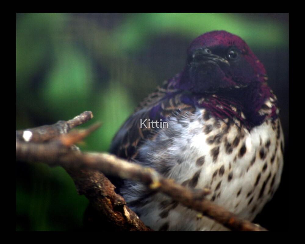 bird 03 by Kittin
