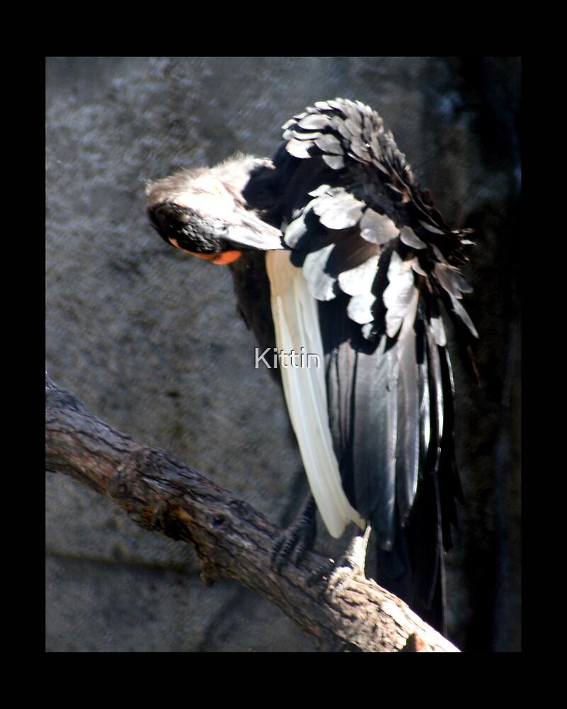 bird 04 by Kittin