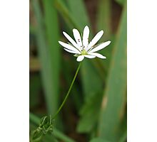 Single White Flower Photographic Print