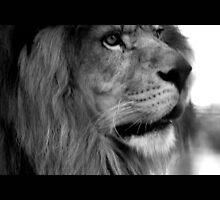 lion 04 by Kittin