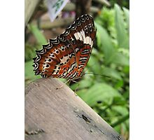 butterfly...obviously!! Photographic Print