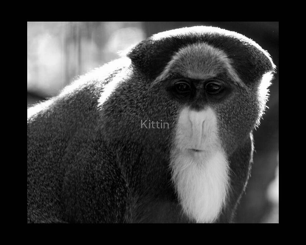 monkey 03 by Kittin