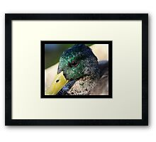 bird 08 Framed Print