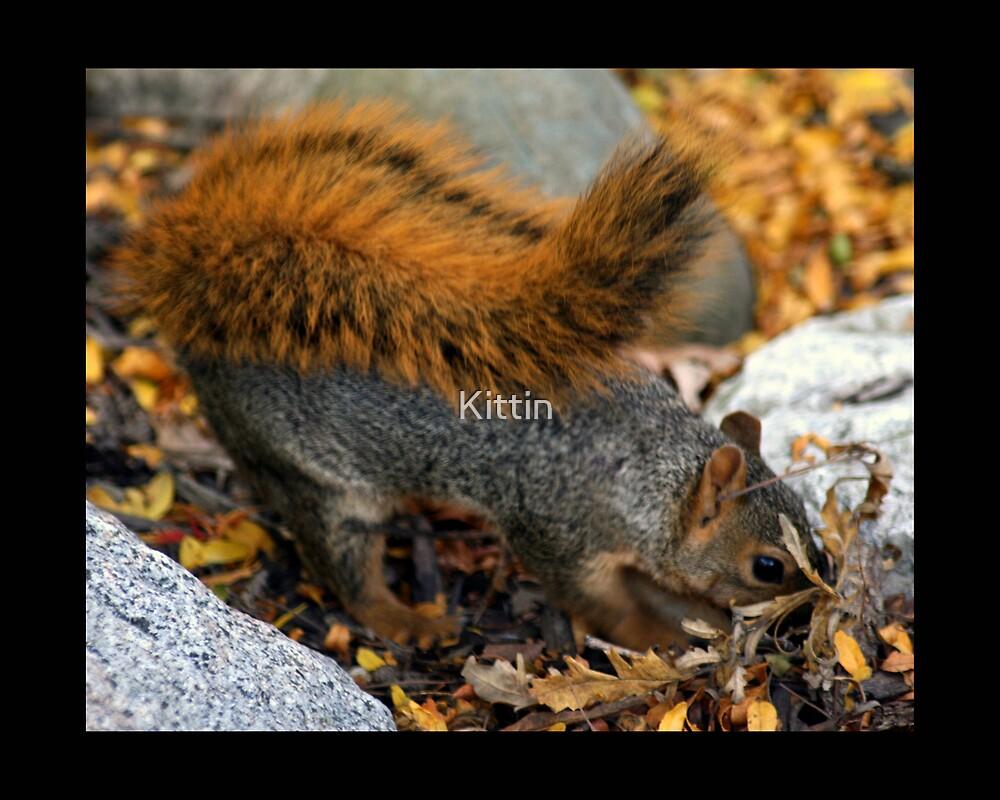 squirrel 02 by Kittin
