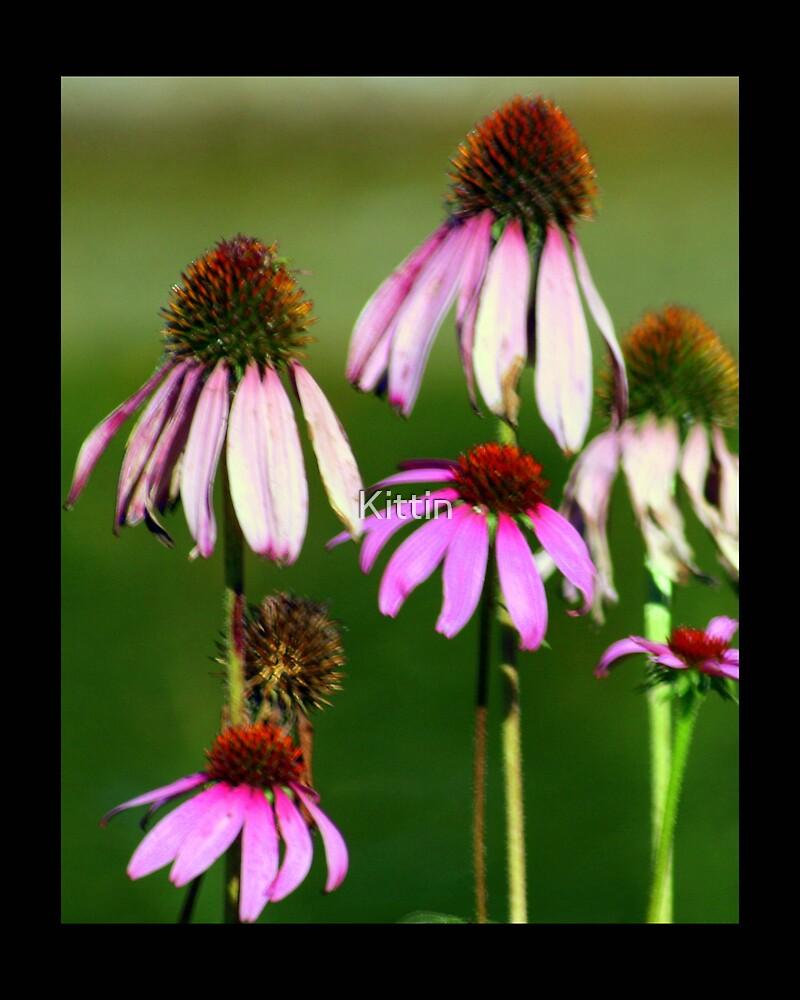 flower 42 by Kittin