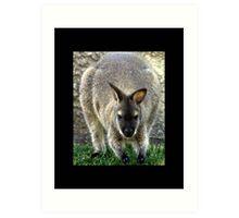 kangaroo 01 Art Print