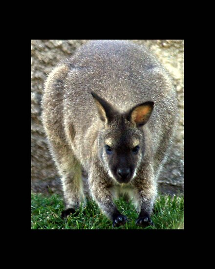 kangaroo 01 by Kittin