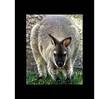 kangaroo 01 Photographic Print