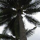 palms by SusanC
