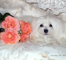 Snowdrop the Maltese & Roses by Morag Bates