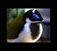 bird 10 by Kittin